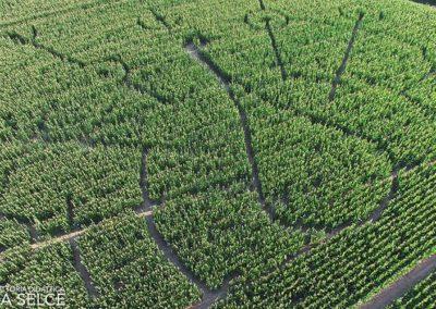 labirinto 2017: la fattoria didattica
